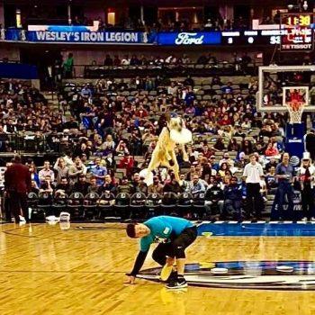 NBA halftime dog show